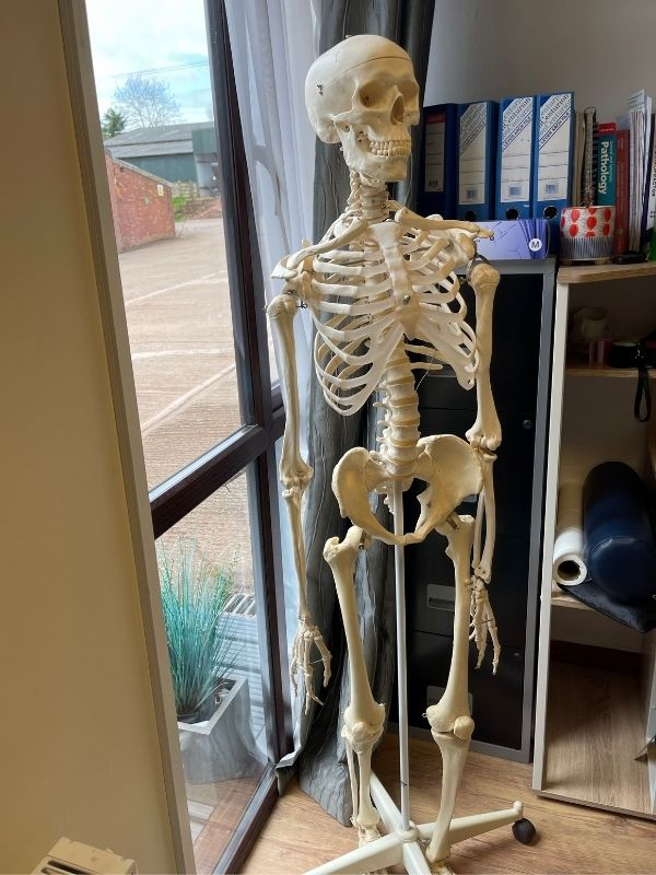 Chiropractic offers oSkeletal and spinal manipulation