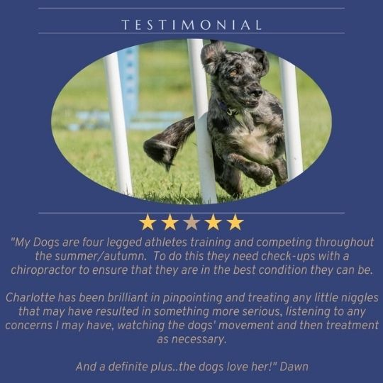 Testimonial from Dawn re her dog