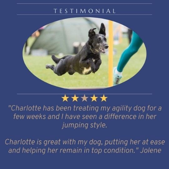 Testimonial from Jolene about her agility dog