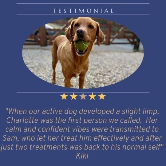 Testimonial from Kiki from Charlotte working with her dog